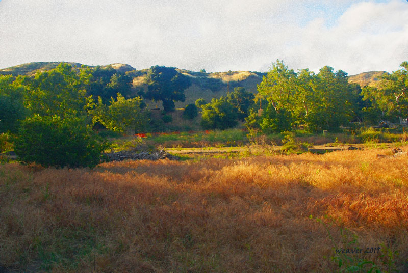Landscape of Placerita Canyon with rolling hills